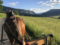Hiking with a donkey Horse and carriage