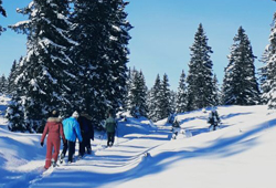 Snowshoes in winter and Nordic Experience